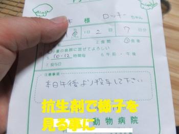 DSCF1443.JPG