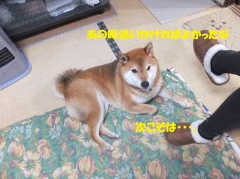 DSCF6231-1.jpg