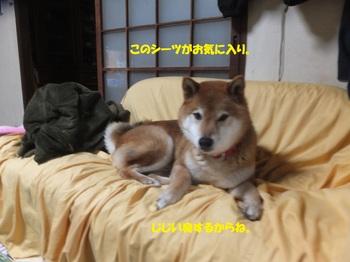 DSCF6236-.jpg