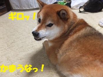 DSCF7637-1.jpg