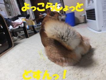 DSCF7807-1.jpg