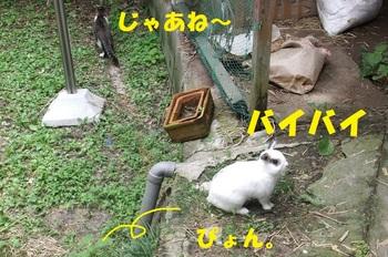 DSCF9885-1.jpg