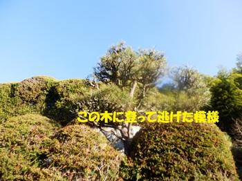 P1024195-1.jpg