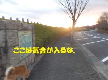 P2020469-1.jpg