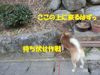 P2040575-.jpg