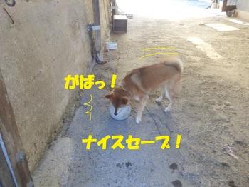 P2160889-1.jpg