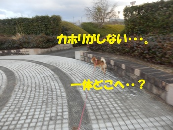 P3071517-1.jpg