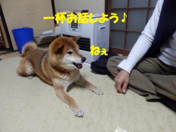 P3201932-1.jpg