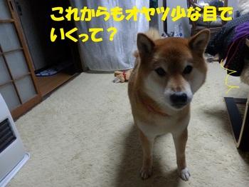 P3272179-1.jpg
