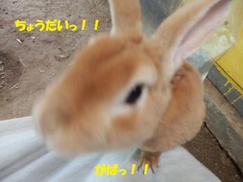 P4123385-1.jpg