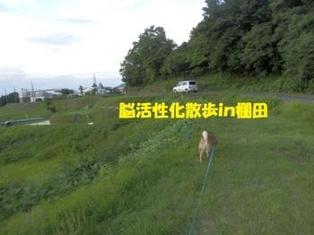 P6215671-1.jpg