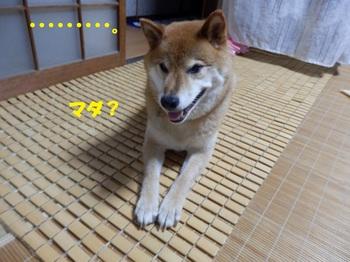 P7256666-1.jpg