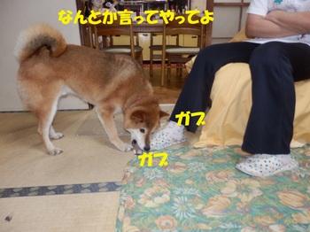 P8270444-1.jpg