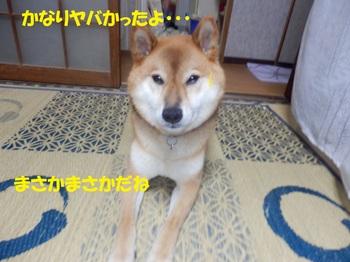 P9030888-1.jpg
