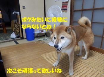 P9110864-1.jpg