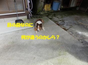 P9271218-2.jpg