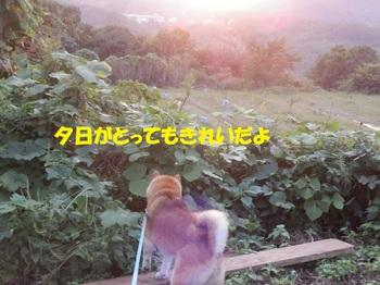 PA011353-1.jpg
