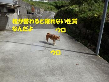 PA071477-1.jpg