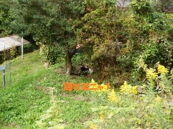 PA161846-1.jpg