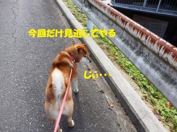 PA161847-1.jpg