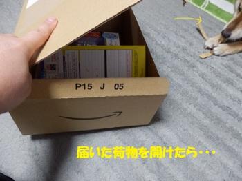 PA164806-1.jpg
