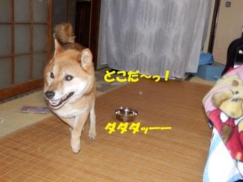 PA260383-1.jpg