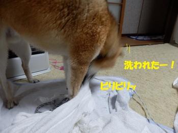 PC163641-1.jpg