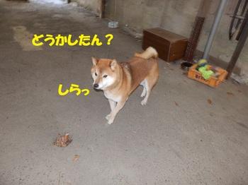 PC233710-1.jpg