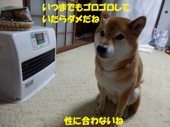 PC233735-1.jpg