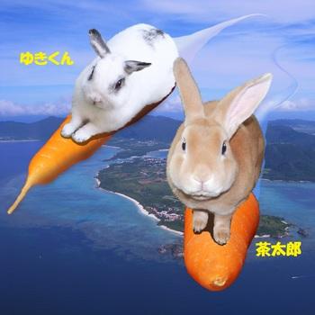 ゆき&茶太郎-50002016--1.jpg