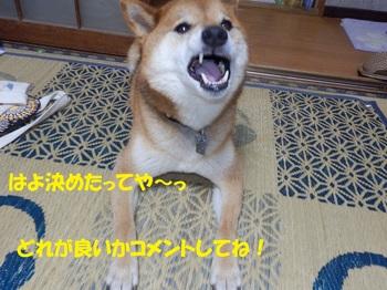 PA041740-1.jpg