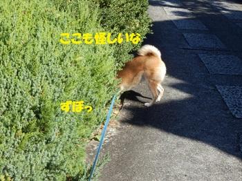 PA265159-1.jpg